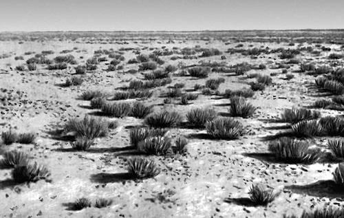 Равнинный участок пустыни Гоби