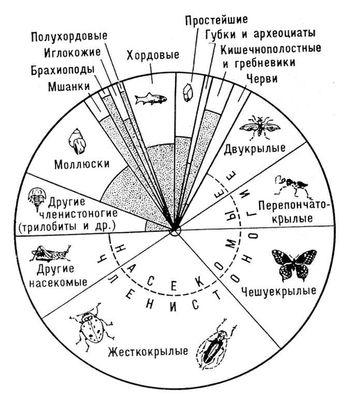 Современные и вымершие животные (относительное количество)