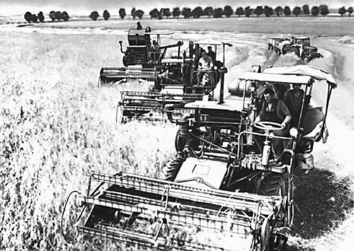 Уборка урожая в государственном хозяйстве (Польша)