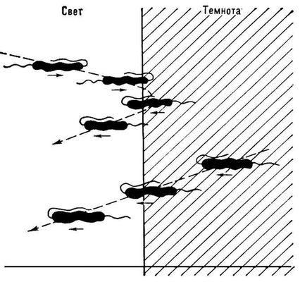 Эффект световой ловушки (схема)