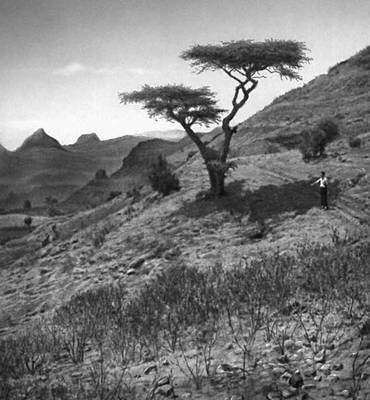 Эфиопское нагорье (пейзаж)
