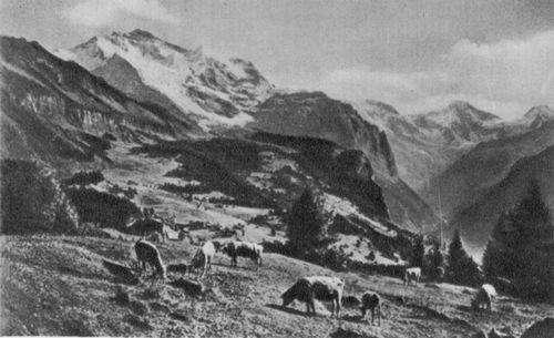 Юнгфрау (массив в Альпах)
